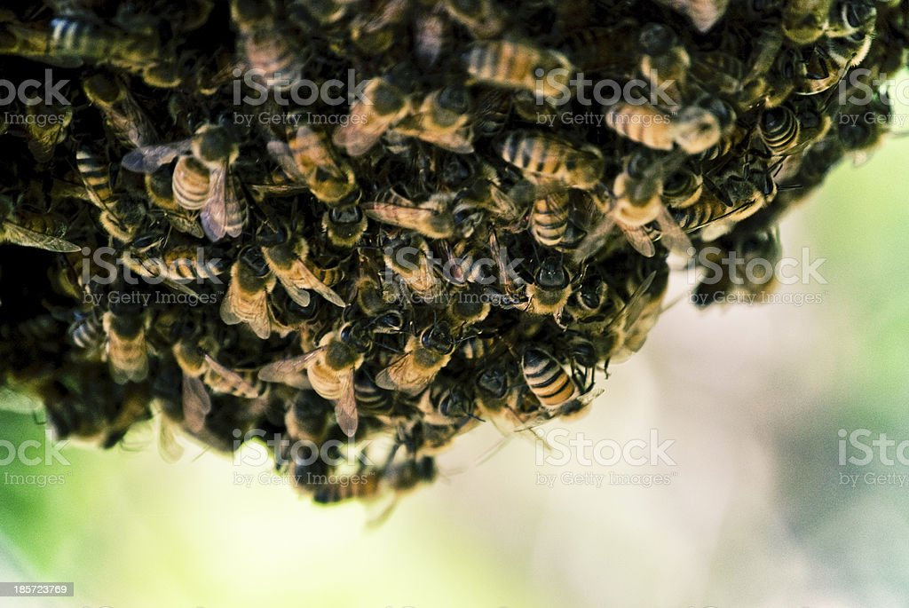 Bee Nest stock photo