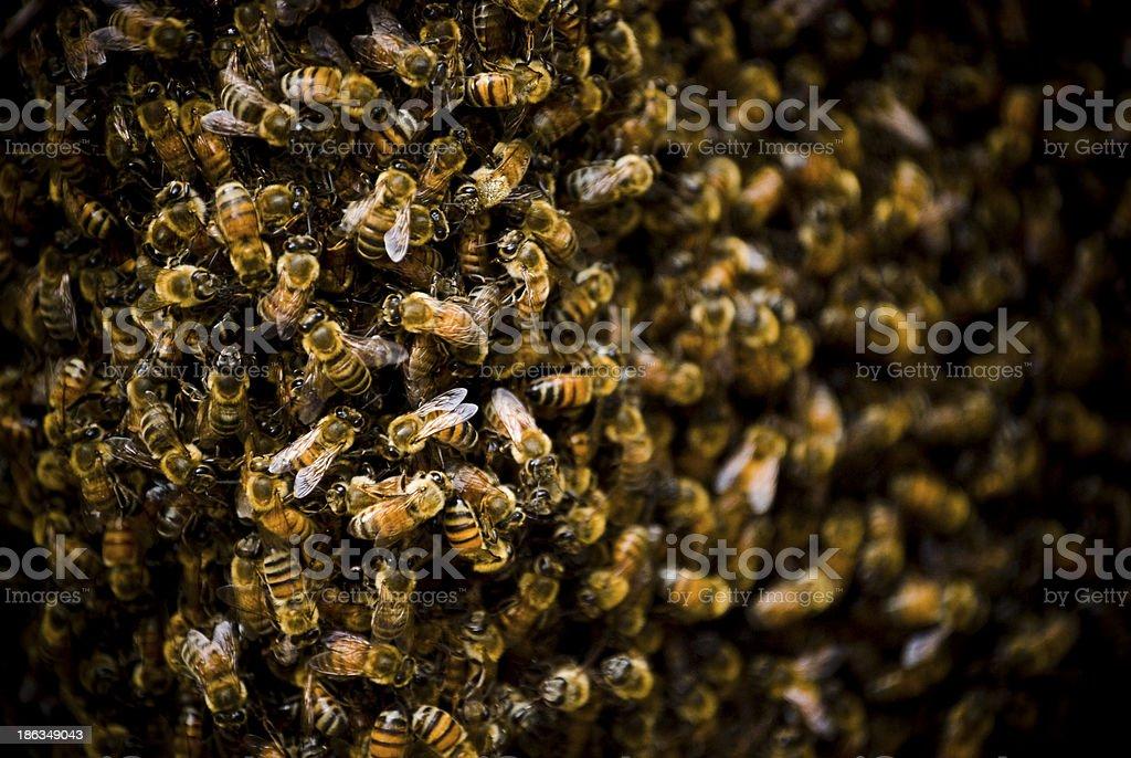 Bee Nest royalty-free stock photo