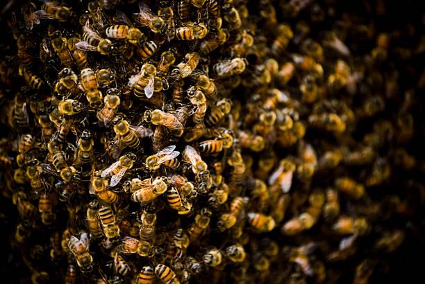 Bee Nest stock photo