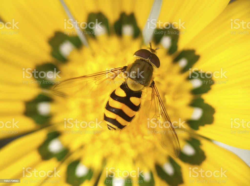 Biene auf Blüte – Foto