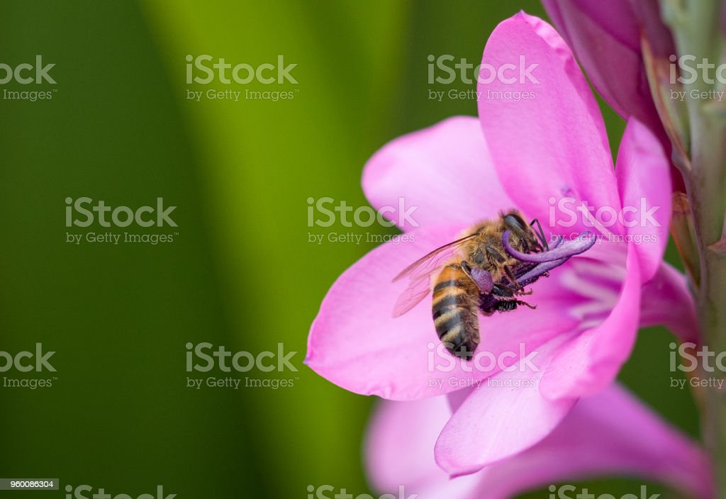 A bee on a flower stock photo