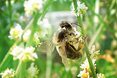 istock Bee on a flowering branch 1227327054
