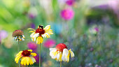 Bee on a spring flower against blurred flowers background. Shallow focus.