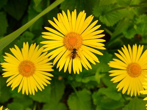 A Bee On A Yellow Flower — стоковые фотографии и другие картинки Без людей