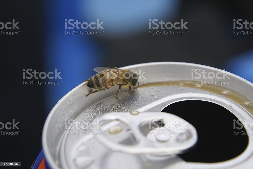 Bee on coke royalty-free stock photo