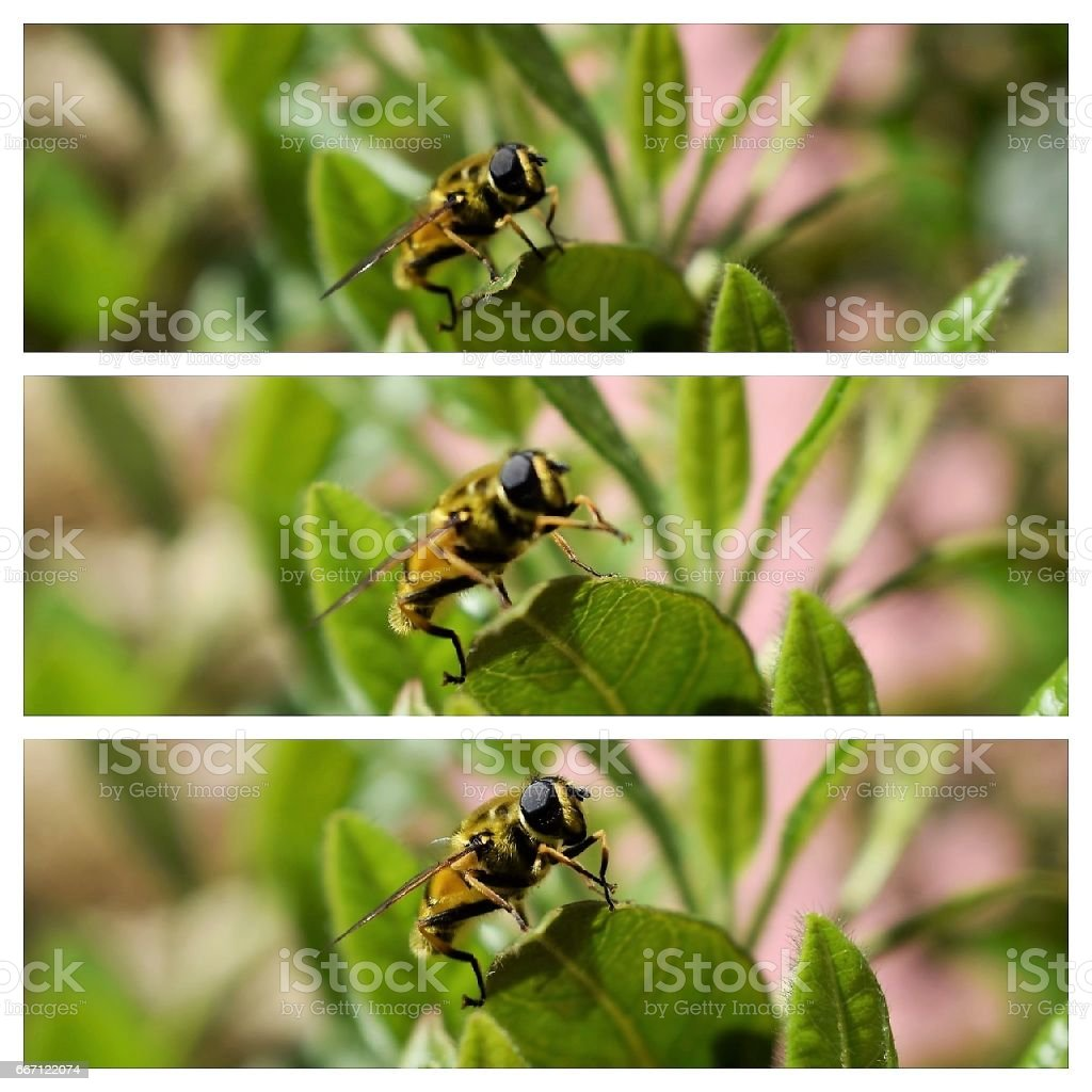 Abelha na flor - foto de acervo