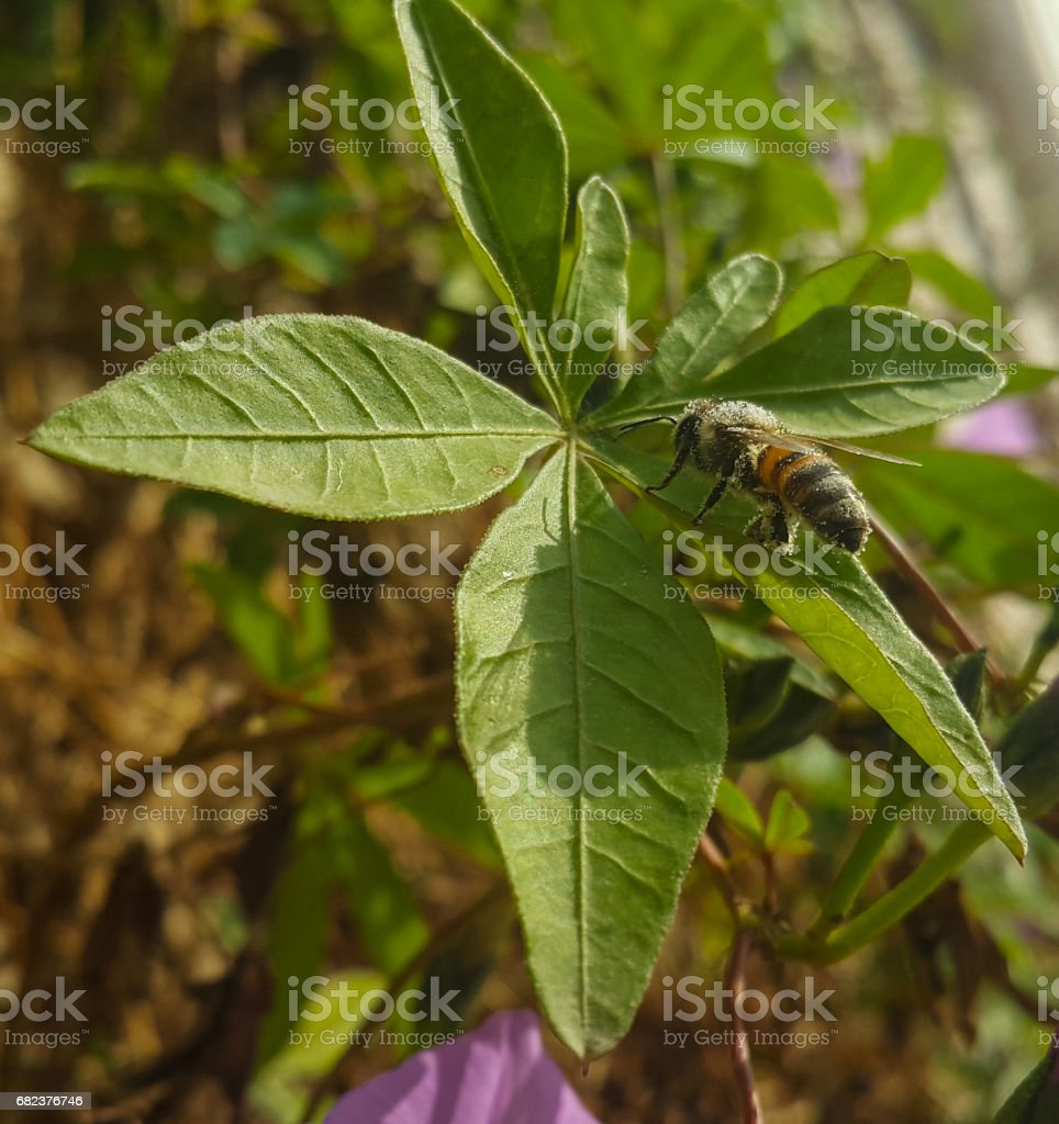 bee on leaf royalty-free stock photo