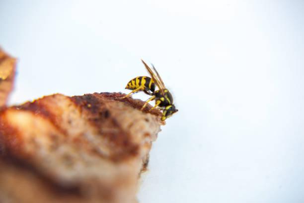 Bee on Steak stock photo