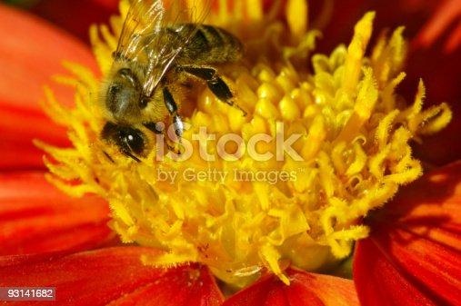 istock Bee on Summerflower 93141682