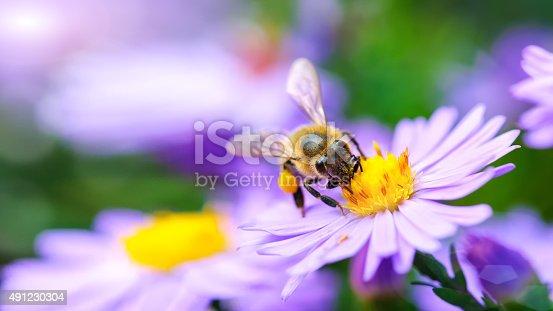 istock Bee on the flower 491230304