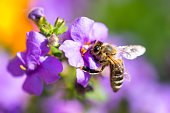 Bee on the flower. Small useful insect is working and making honey. Honeybee with wing on the blossom. Spring at countryside of meadow.