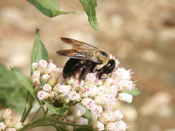 Bee on Tiny Flowers stock photo