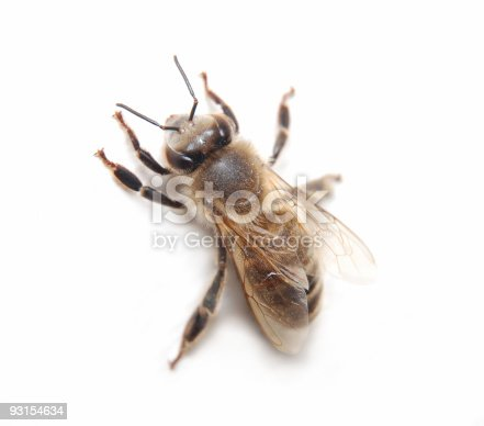 istock Bee on white background 93154634