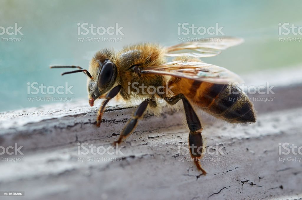 Bee on window sill stock photo