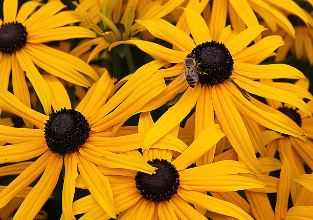 Bee on Yellow Flower stock photo