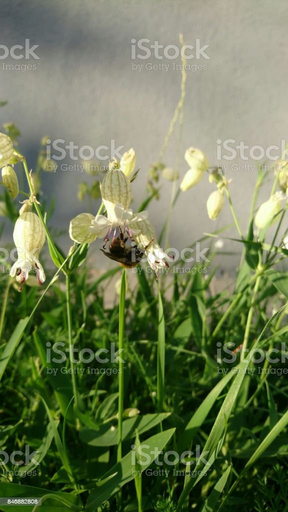 Bee picking pollen from white rings stock photo