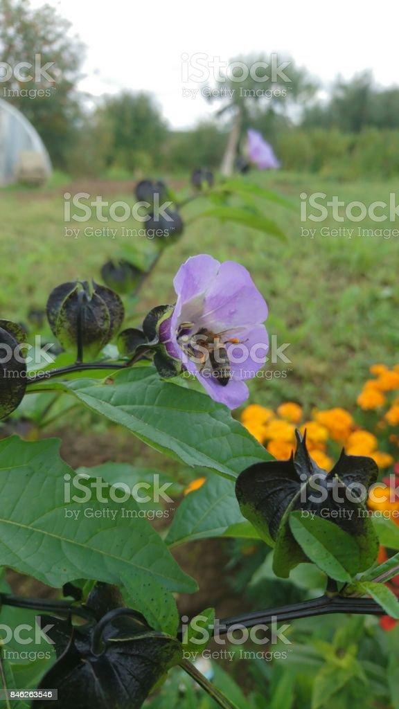 Bee picking pollen in season of fall stock photo
