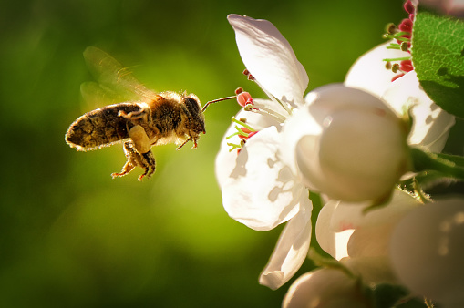 Enjoy the spring! Everything is blooming and the bees are diligently flying from flower to flower. I would like to share this spring feelings with you and have taken this picture for you.