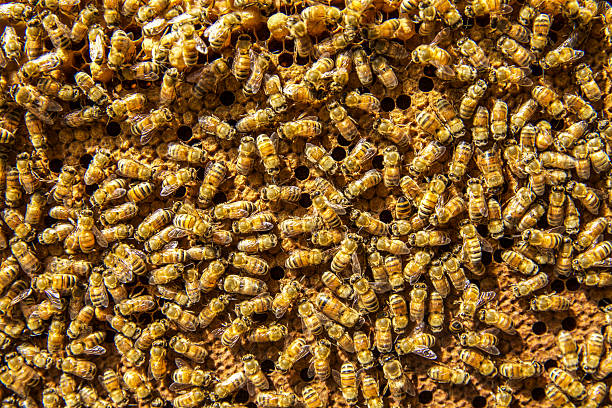 bee - swarm of insects stock photos and pictures