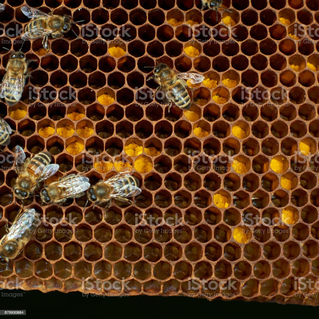 Bee pollen stored in honeycomb stock photo