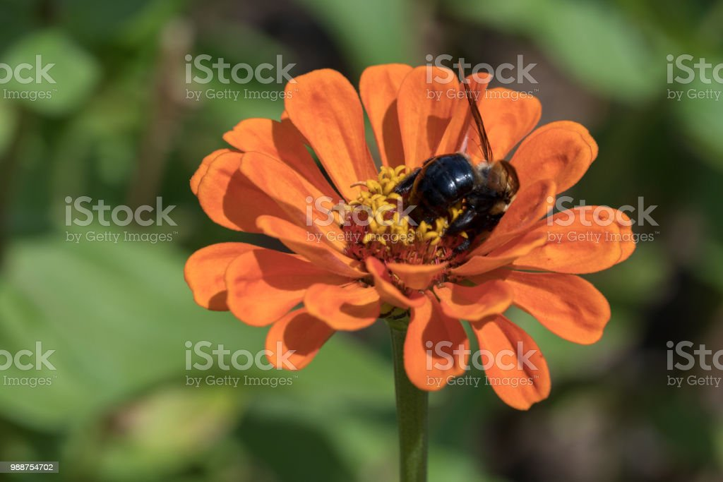Bee pollinating flower stock photo