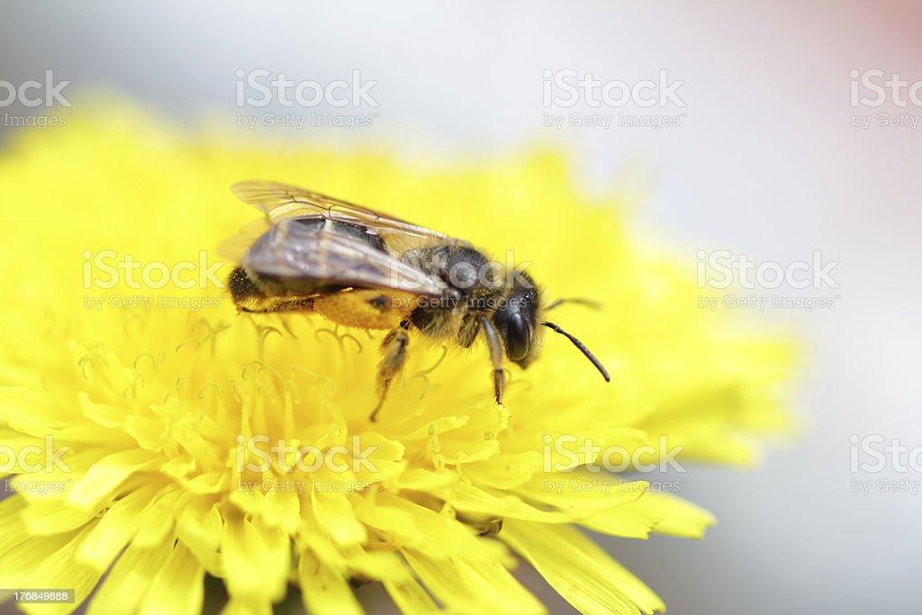 bee side stock photo
