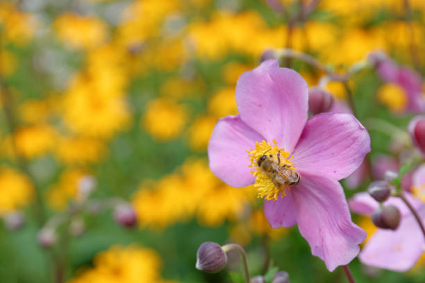 Bienenfresser sitzt auf einem Rosa Blume – Foto
