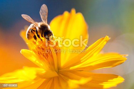 A bee landing on a flower