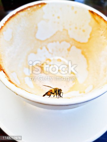 A bee clings on to an empty coffee cup sucking up the foamy residue.