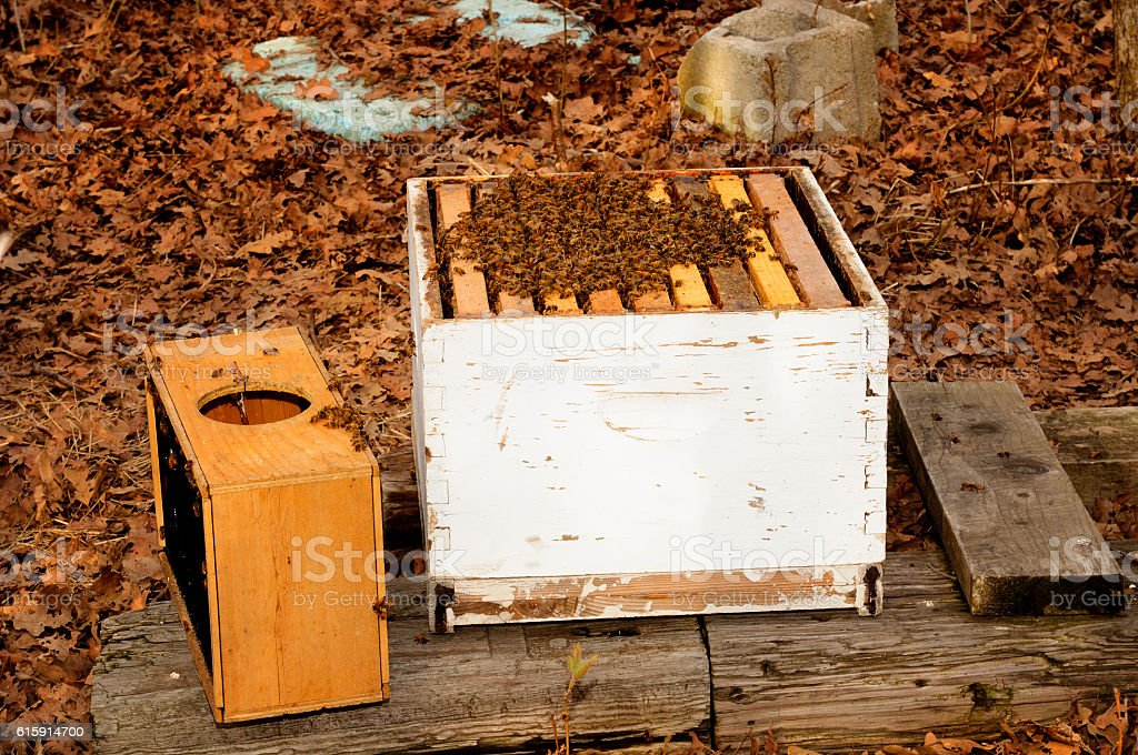 Bee Super With New Colony In Nature Setting stock photo
