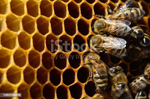 Bee turns nectar into fresh and healthy honey