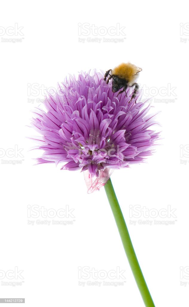 bee-autiful stock photo