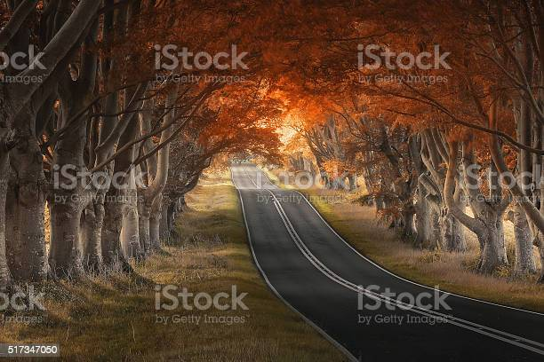 Beech Avenue Stock Photo - Download Image Now
