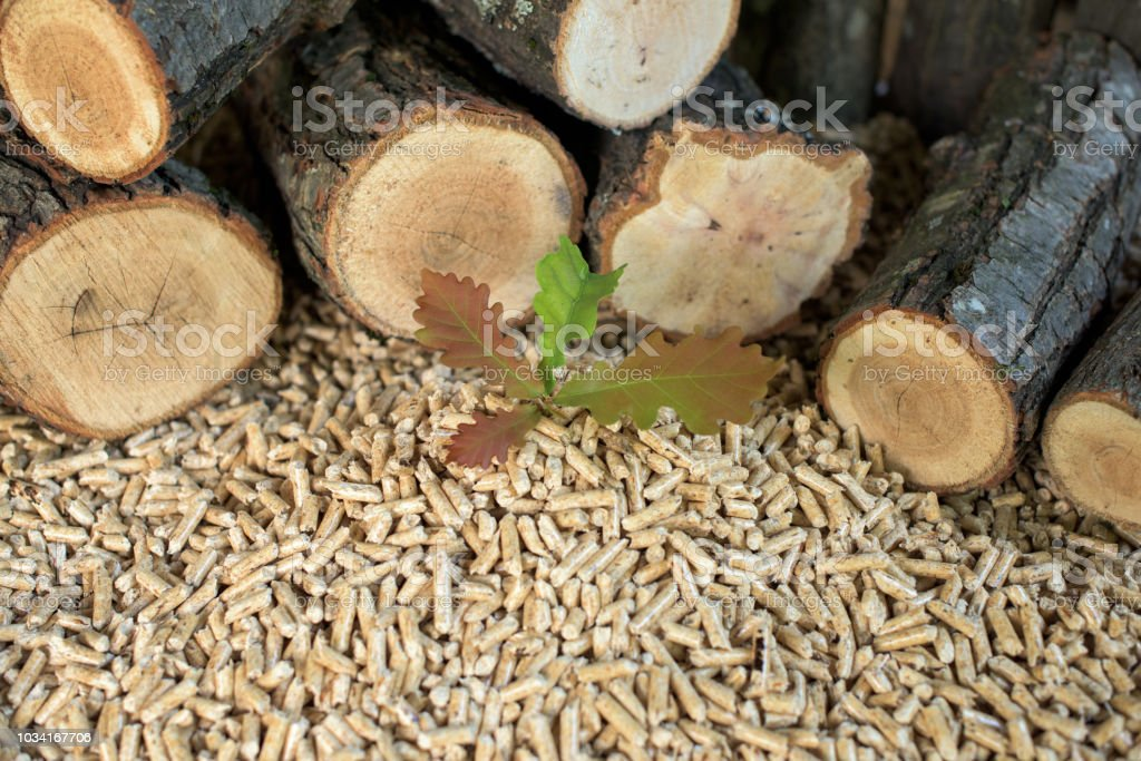 Beech biomass stock photo
