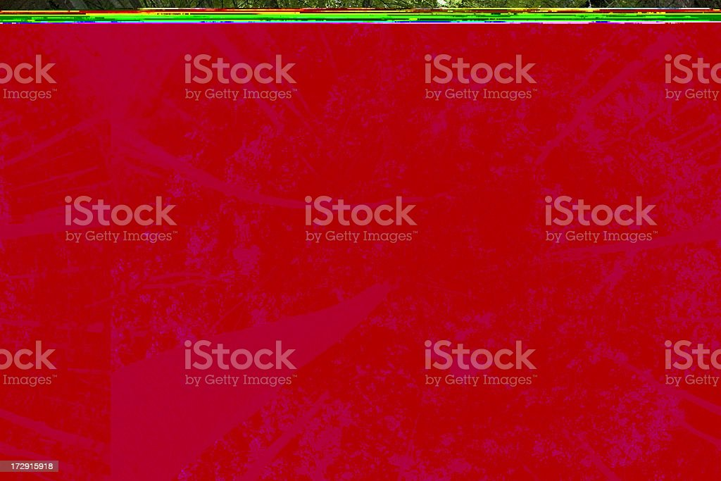 Beech forest canopy. royalty-free stock photo