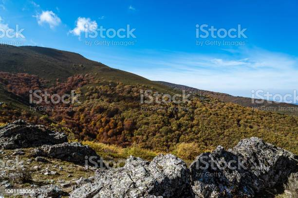 Photo of Beech forest in Autumn time a sunny day