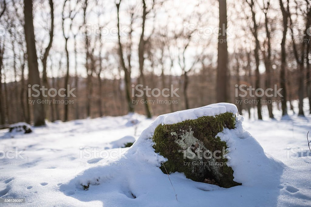 beech forest in winter stock photo