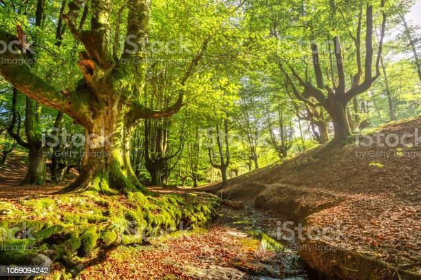Photo of beech forest of Otzarreta in Gorbea national park. Spain