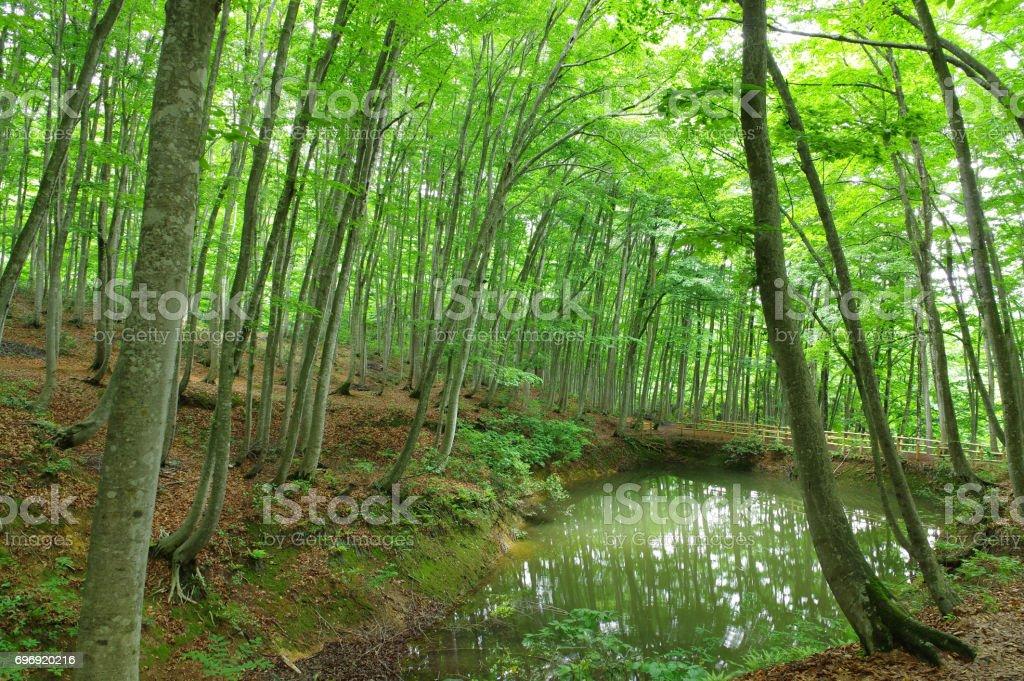 ミヤマ森林 ストックフォト