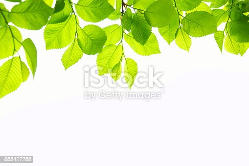 Spring leaves on white background.