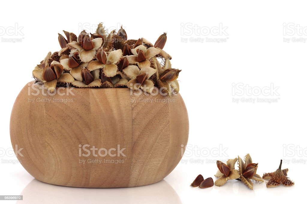 Beech Nuts royalty-free stock photo