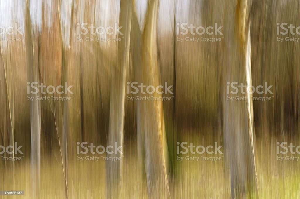 Beech pictorial stock photo