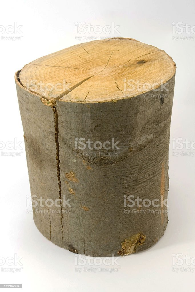 Beech stump on a white blank background royalty-free stock photo