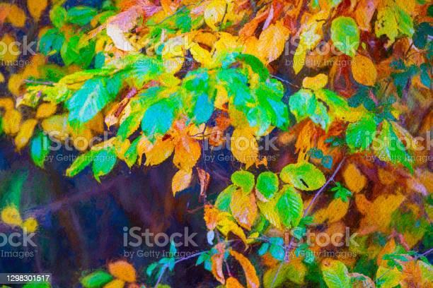Photo of Beech tree in autumn
