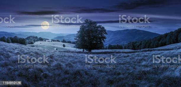 Photo of beech tree on the meadow in mountains at night