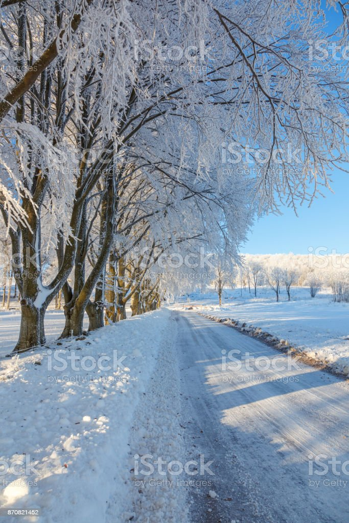 Beech tree with hoarfrost at a road stock photo