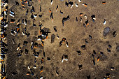 Aerial view of a traditional beef cattle farm in Texas, USA.