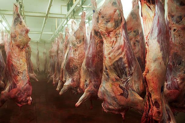 rindfleisch - kühlraum stock-fotos und bilder