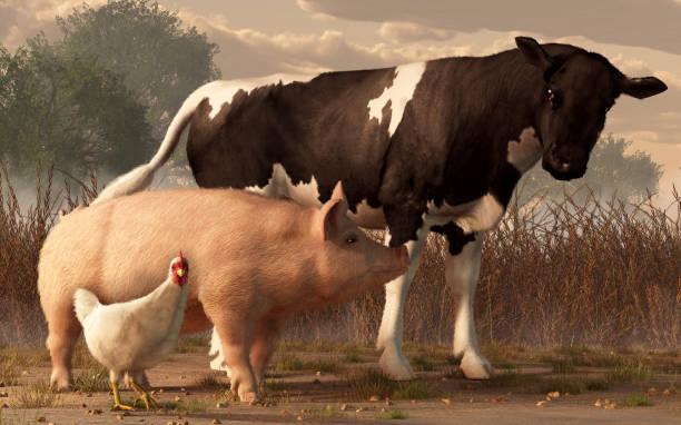 beef, pork, and poultry - scrofa foto e immagini stock