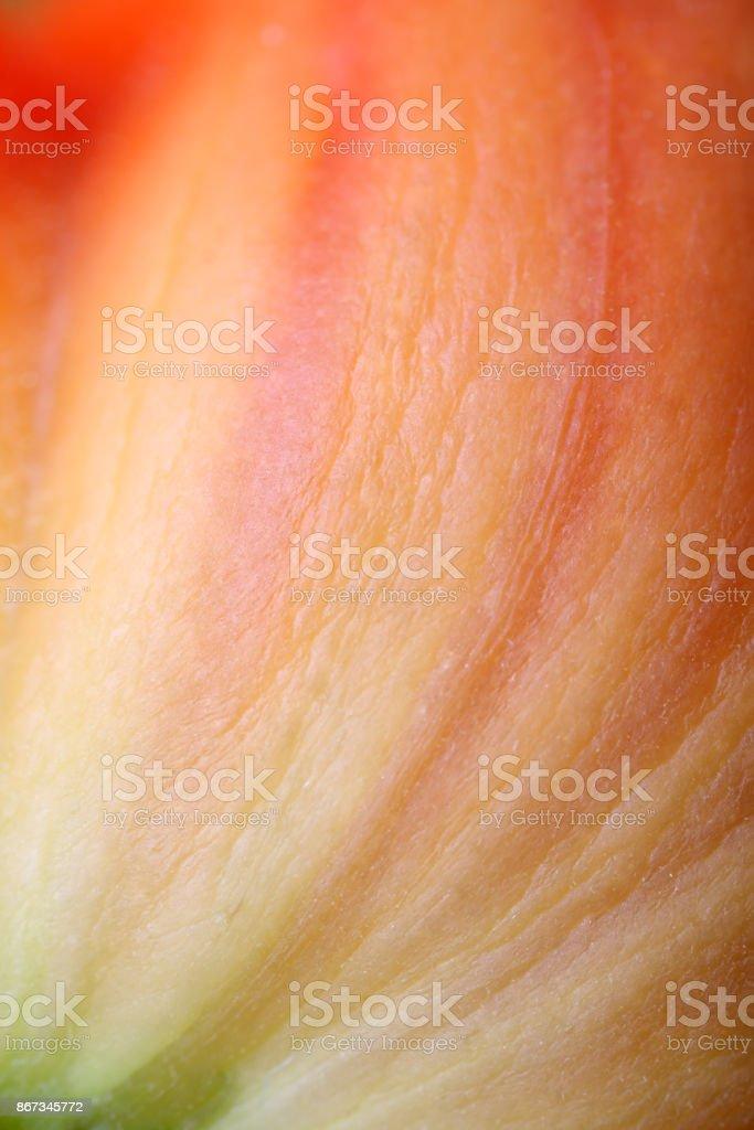 Beef tomato stock photo